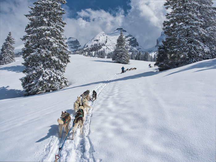 View of dog on snow covered landscape