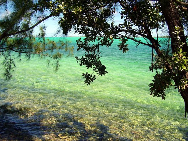 Beauty In Nature Branch Casurina Day Emerald Water Forest Green Color Growth Landscape Nature No People Outdoors Rocky Shore Scenics Sea Seagrape Tree Tranquil Scene Tranquility Tree Tropical Tropical Climate Water