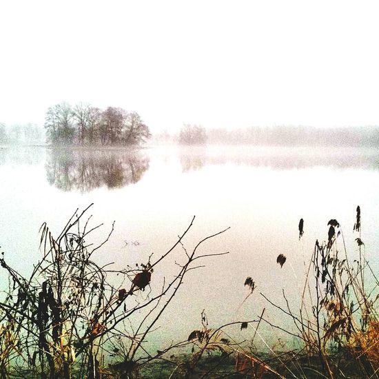 Foggy lake Lake View Lakeshore Lake Lakeside Foggy Day Foggy Trees