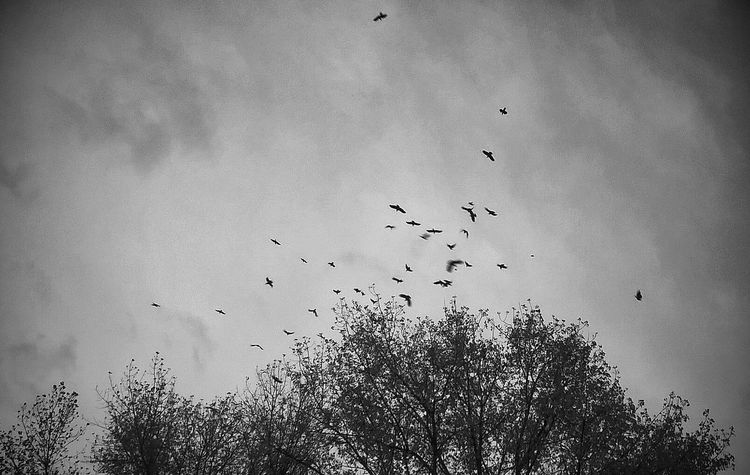 Grey Day Crows Depressing Days Birds Blackandwhite Keep It Simple Urban Birds Monochrome _ Collection Learn & Shoot: SimplicityMelancholic Landscapes