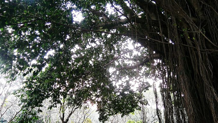 Still overbright Taking Photos Htcm8 Htc One M8 Hugging A Tree Enjoying The Sun Outdoor Photography Panoramic Bandung INDONESIA