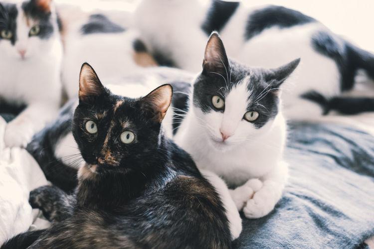 Close-up portrait of cats