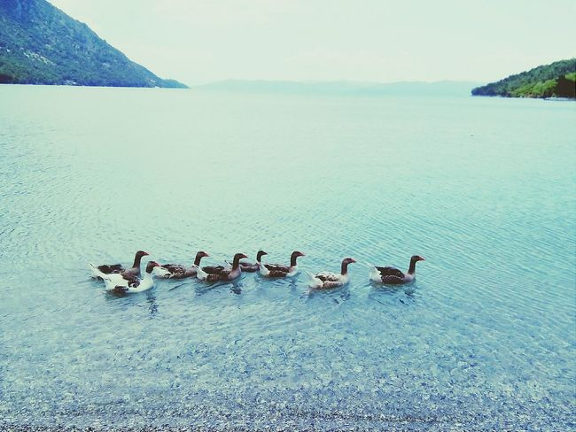 Hi! Gooses Sea Sea And Sky Nature Naturelover Landscape Vscocam Colorful Could  Sky Nice Goose Life In Colors Popular Photos Nature Colors Enjoying Life Marmaris Turkey