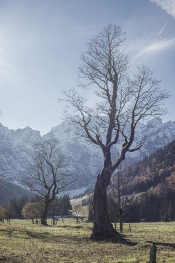 Bare trees on landscape against mountains