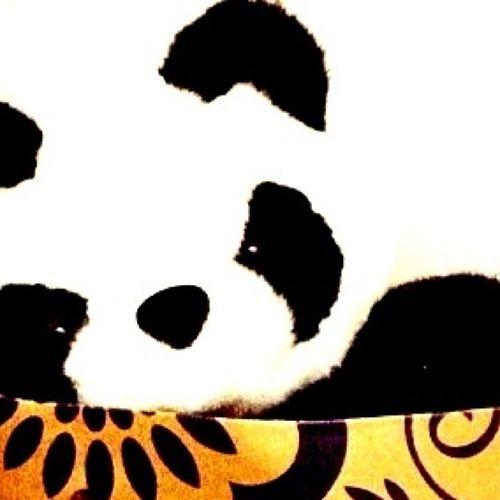 And he finally waved goodbye to me..bye! Panda Pandy Bye