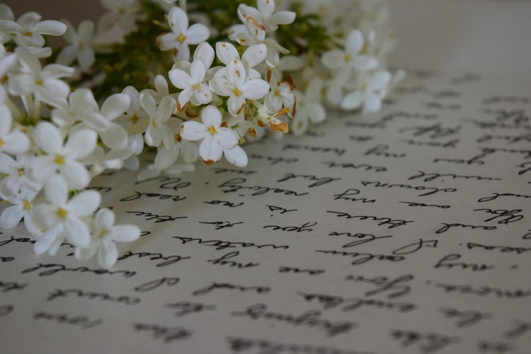 Close-up of white lilacs on love letter with text