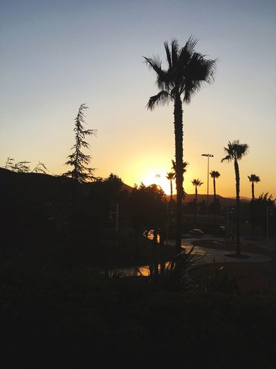 Sunset Nature Trees California Palms