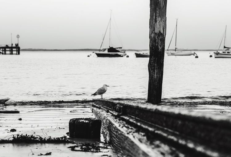 Seagull standing on the boat ramp Seagull Black And White Relaxing The Great Outdoors - 2016 EyeEm Awards Boat Ramp EyeEm Best Shots By The Sea Capture The Moment Watching The Sea Australia Outdoors EyeEm Nature Lover Nature_collection Flinders Melbourne Australia