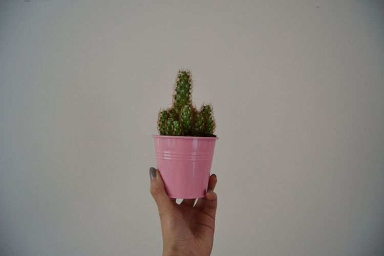 Human Hand Celery Healthy Lifestyle Studio Shot Holding Potted Plant Vegetable Close-up Plant Green Color Cactus Barrel Cactus