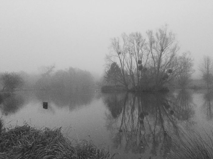 Fog Foggy Foggy Day Brouillard Brume Lac Seine Et Marne Landscape Nature Paysage 77 Lake Etangs Reflection Iphone6plus IPhoneography