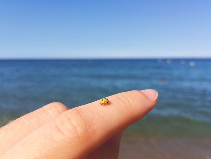 Cropped finger with ladybug against sea