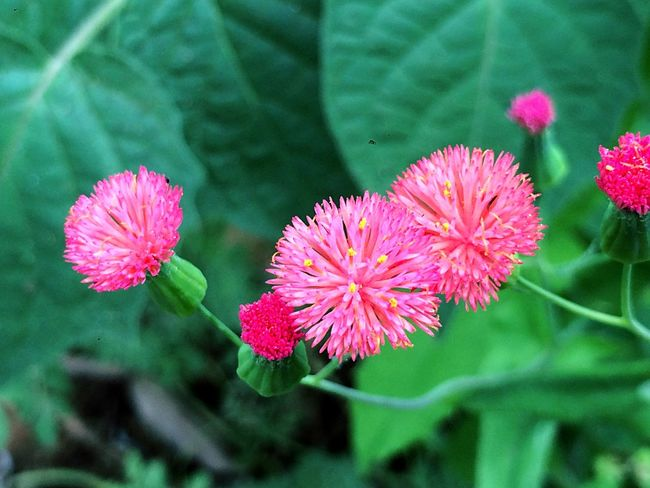 Pink on green Flowers Nature