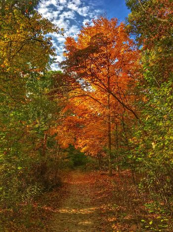 BlydenburghPark-APunchOfColor Nature Tree Outdoors Beauty In Nature Tranquility Tranquil Scene Long Island, Ny Trail Wooded Path Autumn Colors Autumn