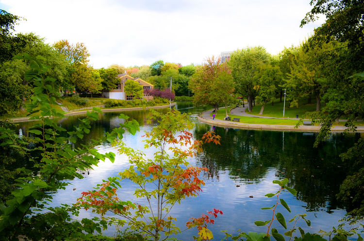 Autumn bright colors Reflection Water Flower Nature Sky Tree No People Outdoors Scenics Day Beauty In Nature Low Angle View Tranquil Scene Backgrounds Fresh On Eyeem  Beauty In Nature Nature Autumn Autumn Colors Autumn Collection Autumn Leaves Autumn🍁🍁🍁 LaFontainePark LaFontaine Montrealcity