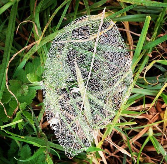 Leaf Pemberton Nature Winter Deceptively Simple