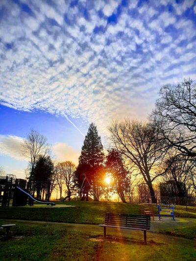 Bare trees in park against sky during sunset