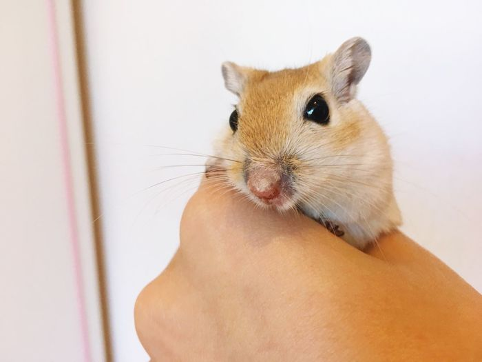 Close-up of hand holding mouse at home