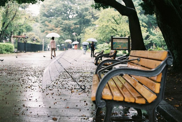 Abandoned Alone Autumn Bench Footpath Garden Japan Narrow Natural Light Park - Man Made Space Rainy Day Rear View Relaxing Season  Tokyo Travel Ueno Ueno Park Umbrella Pmg_tok