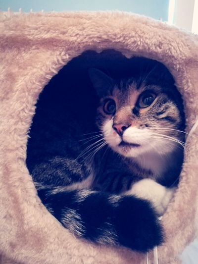 Pets Animal Kitten Cat Catlover Mycat♥ Home Is Where My Cat Is Cute Cats Love ♥ Adorehim