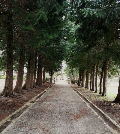 Bedonia Hello World No People Park Tree Sky Empty Road Countryside Woods Sunrays
