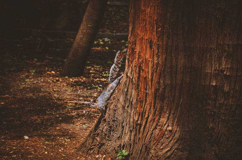 Getting closer EyeEm Nature Lover Nature Photography Bark Brown Chipmunk Close-up Cortex Day Field Focus On Foreground Forest Growth Land Nature Nature_collection No People Outdoors Plant Textured  Tree Tree Trunk Trunk Wood Wood - Material WoodLand