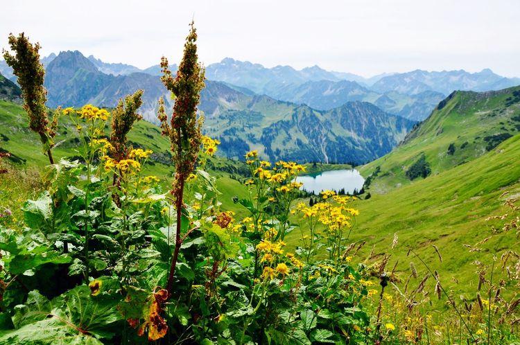 Oberstdorf & Umgebung