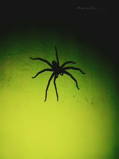 Spider Insect Animals In The Wild One Animal Green Color Animal Wildlife Animal Themes No People Close-up Full Length Nature Outdoors Day UnderSea