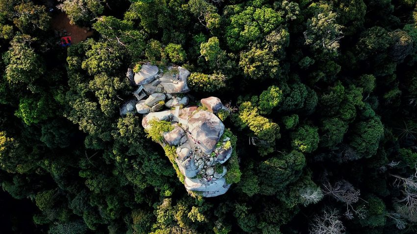 mount Datuk Rembau Dji Aerialphotography Aerial View EyeEm Selects Topdown Eyebird Mavicpro Growth Plant Nature No People Day Beauty In Nature High Angle View Tree Outdoors Full Frame Green Color Land Tranquility UnderSea