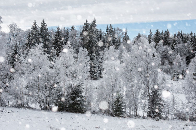 Scenic view of trees against cloudy sky during snowfall