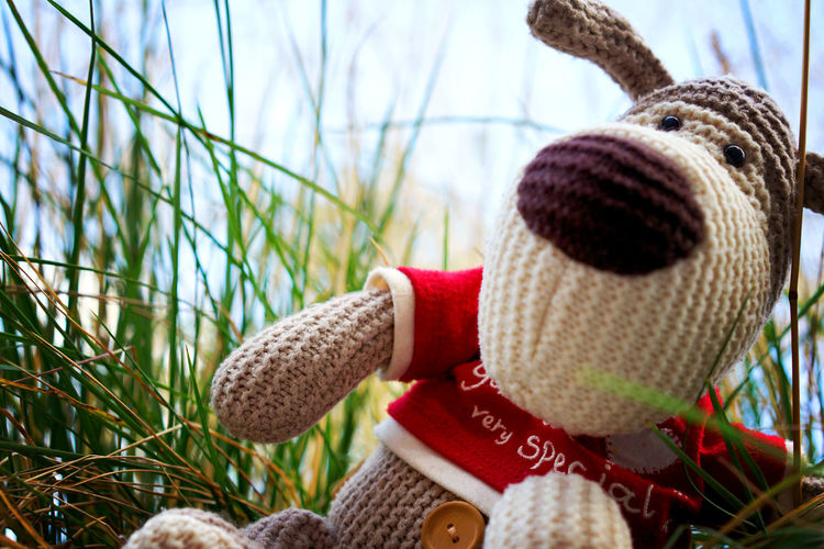 Boofle Boofle Boofle Toy Dogs Of EyeEm Grass Stuffed Toy Stuffed Toys Toys Beauty In Nature Childhood Close-up Day Dog Dogtoy First Eyeem Photo Growth Nature No People Outdoors Sky Teddy Bear Toy Toy Photography Toyphotography