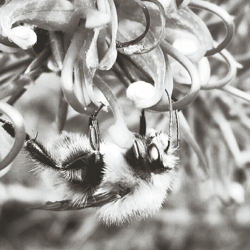 Monochrome Bee Bugs