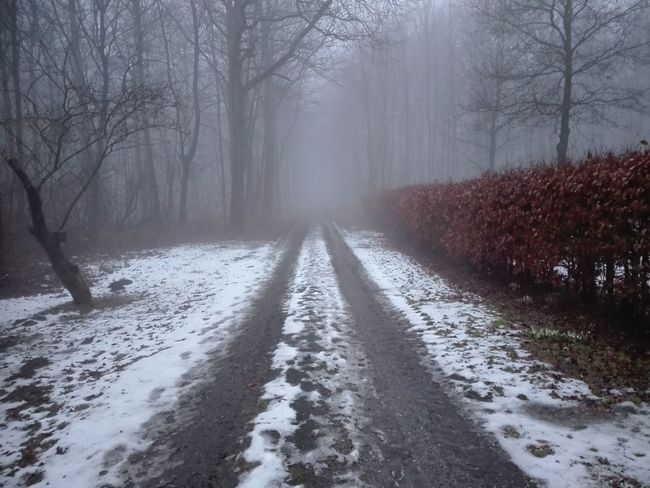Path Day No People Mist Misty Foggy Tree Cold Temperature Snow Bare Tree Winter Fog Forest Road Weather Empty Road Dirt Road