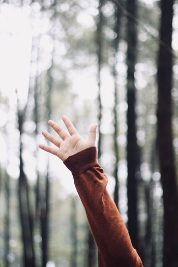Cropped image of person hand against trees in forest