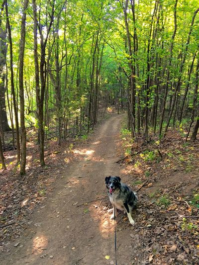 Nature Dog Pet Forest Green Trail Trees Tree WoodLand Nature Outdoors