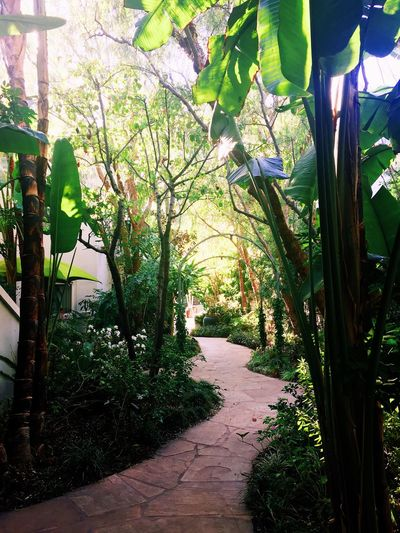 Footpath Green Color Growing Jungle Leaf Los Angeles, California Lush Foliage Nature No People Outdoors Pathway Sunlight Sunset Marquis