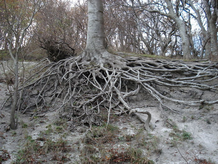 Baum Wurzeln Baumwurzeln Verzweigung Bare Tree Beauty In Nature Branch Close-up Day Forest Growing Growth Landscape Nature No Filter No People Non Urban Scene Non-urban Scene Outdoors Remote Scenics Sky Tranquil Scene Tranquility Tree Tree Trunk WoodLand Root