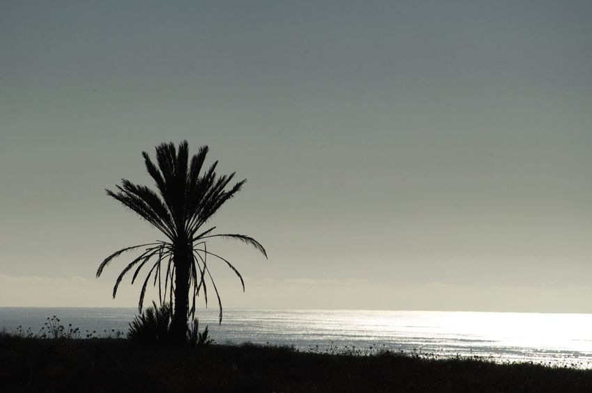 On the Road near Mirleft in Morocco. Morocco MoroccoTrip Beauty In Nature Clear Sky Horizon Over Water Landscape Mirleft Nature Palm Tree Scenics Sea Silhouette Sky Sunset Tranquil Scene Tranquility Tree Water