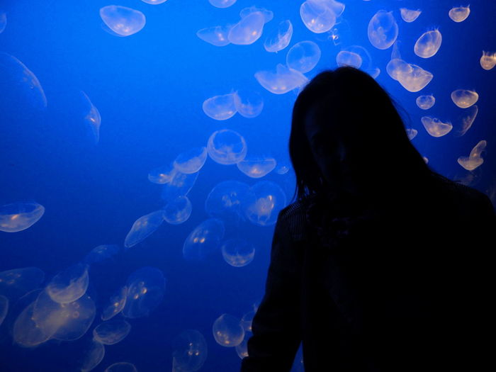 Acquarium Animals In Captivity Animals In The Wild Aquarium Blue Close-up Dark Fish Indoors  Jellyfish Monochrome Nature Person Sea Life Swimming Tourism Tourist Transparent Travel Travel Destinations Underwater Watching Water Wildlife Zoology
