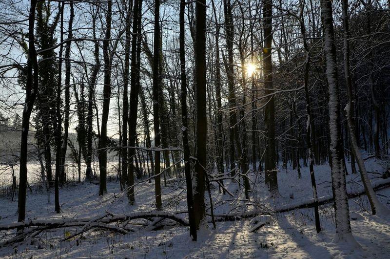 Sun Snow Forest