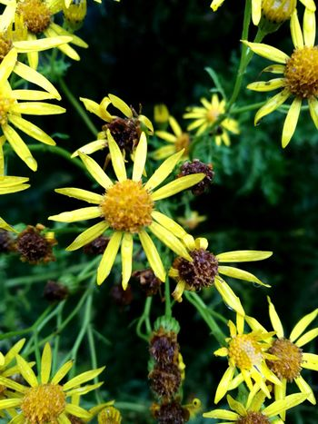 Flower Botany Plant Alternative Medicine Multi Colored Yellow Outdoors Summer No People Outdoor Pursuit Beauty In Nature Day Green Color Nature Fragility Biology Botanical Garden Plant Part Close-up Flower Head Paint The Town Yellow Perspectives On Nature