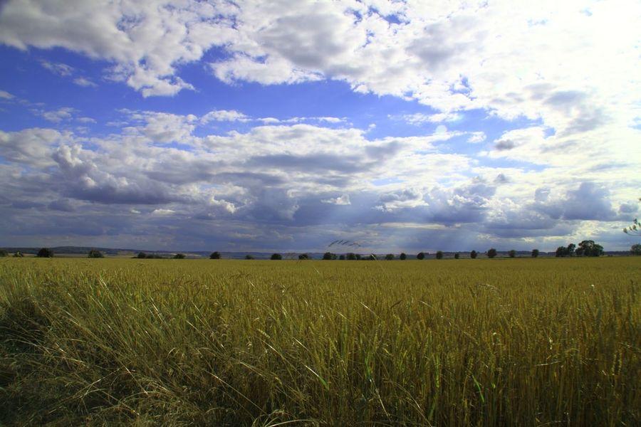 The Cotswolds Rural Scene Outdoors Non-urban Scene Nature Growth Farmland Dramatic Sky Cloudscape Field Cloud - Sky Scenics Landscape_photography
