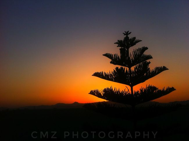 Sunset Silhouette Beauty In Nature Tranquility Growth No People Nature Sky Tree Scenics Outdoors Day Clear Sky Close-up