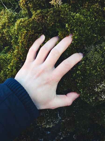 Human touch Abstract Blue Blue Color Closeup Fingers Grasp Green Green Color Hand Human And Nature Human Hand Human Touch HUMANITY Moss Mother Nature Nature Palm Preserve Preserve Nature Preserved Touch Touching Tranquility