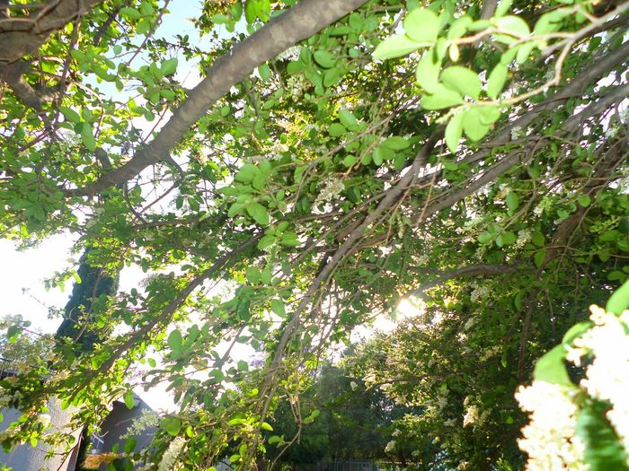 Backlighted Leaves Tree Branch Leaf Forest Close-up Sky Green Color Tree Canopy  Backgrounds