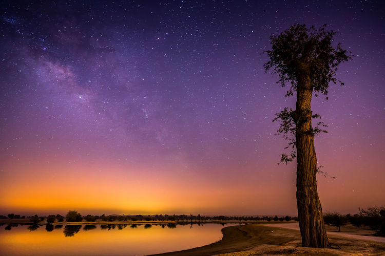 Scenic view of tree against sky at night