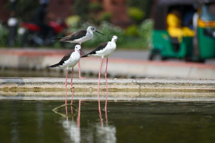 Seagulls perching on a lake