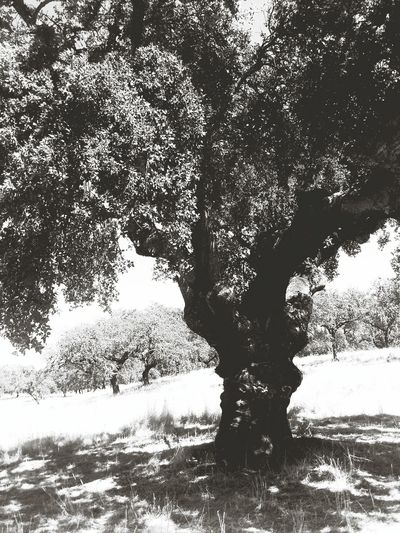 Capa Filter Bw_collection Nature_collection TreePorn