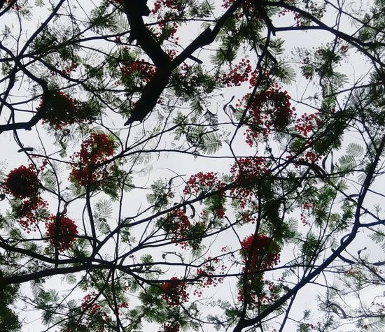 Branch Tree Nature Beauty In Nature Outdoors Growth Day Sky Flower Freshness