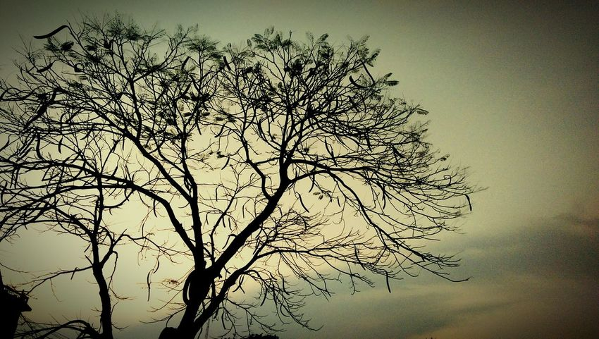 Stranded Tree , Roadside , Evening View EyeEm Nature Lover EyeEm Best Shots Popular Photos