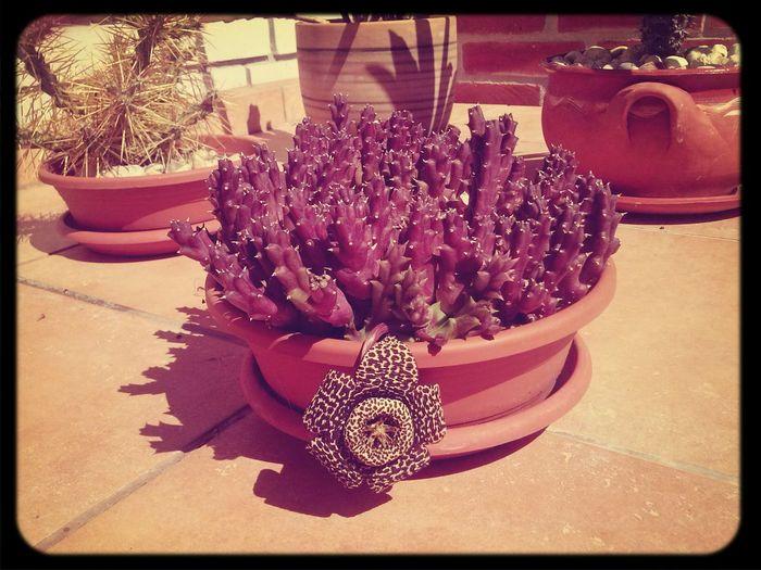 Cactus Beautiful